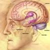 האף האלקטרוני שמזהה סרטן מאתר גם טרשת נפוצה
