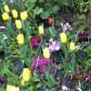 בריאות לכבוד היום הראשון של האביב