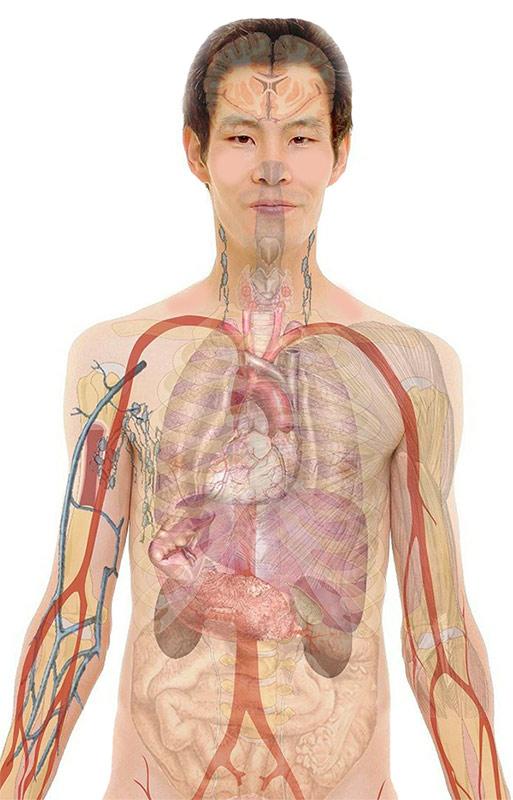 מהם איברים ואילו איברים קיימים במערכות גוף האדם. צילום: Pixabay גרלד אלתמן.